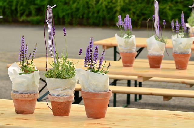 Lavender, Flower Pots, Beer Tent Set, Decoration
