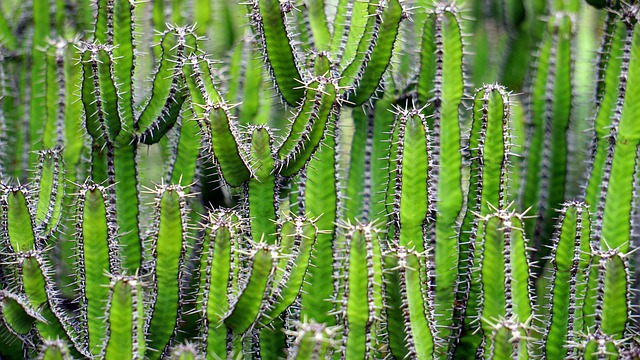 Cactus, Green, Flower, Prickly, Color, Nature, Plant