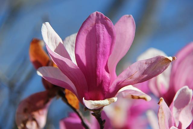 Flower, Purple, Purple Flower, Bloom, Spring, Floral
