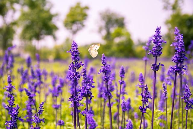 Flower, Purple Flowers, Sage