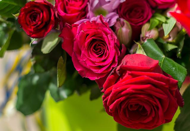Red Rose, Ro, Flower, Nature