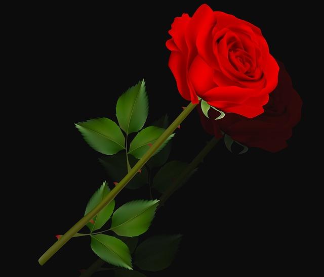 Flower, Rosa, Love, Plant, Petal, Romantic Pink