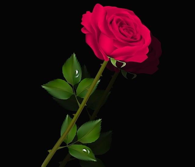 Flower, Rosa, Plant, Petal, Floral, Pink Violet, Drop