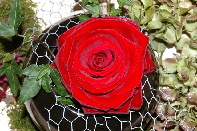Rose, Red Rose, Flower, Rose Bloom, Fragrance, Beauty