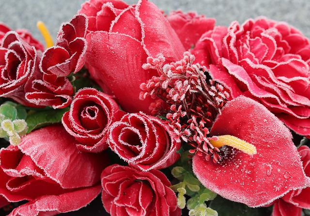 Flower, Rose, Petal, Red Flowers, Color, Frost, Winter