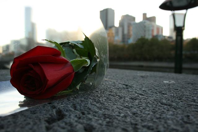 Rosa, Rossa, Red, Flower, Beauty, Valentine's Day, Rose