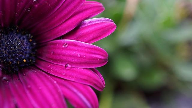 Flower, Blossom, Bloom, Season, Rainy Weather