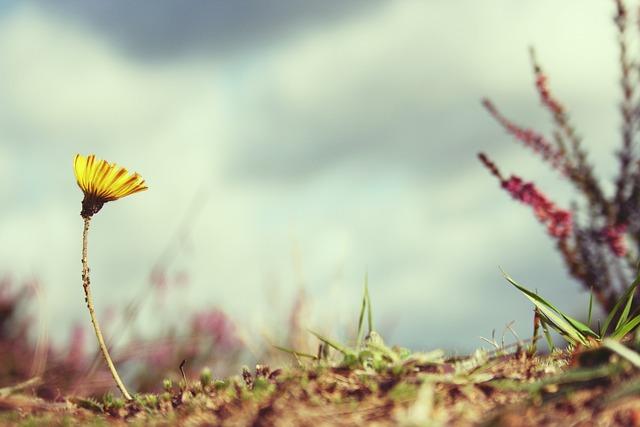 Flower, Setback, Victor, Nature