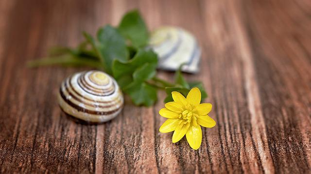 Flower, Celandine, Blossom, Bloom, Yellow, Shell