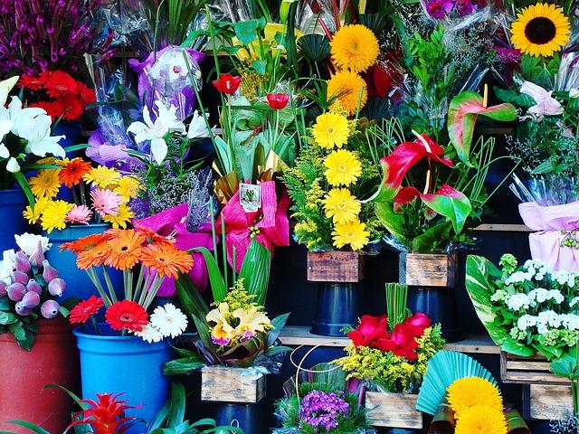 Flowers, Flower Shop, Garden