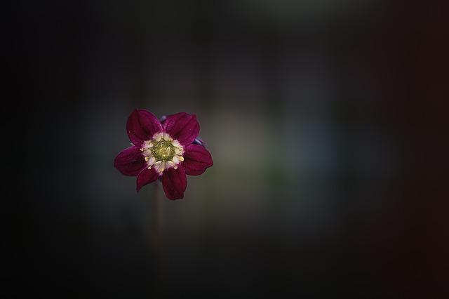 Flower, Blossom, Bloom, Red, Wine Red, Small, Tender
