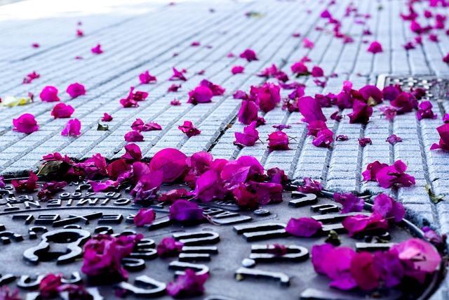 Petals, Soil, Sewer, Iron, Flower, Rosa