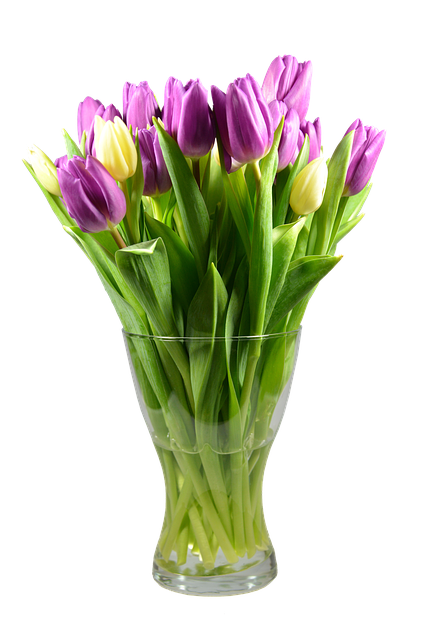 Tulips, Isolated, Blossom, Bloom, Flower, Spring