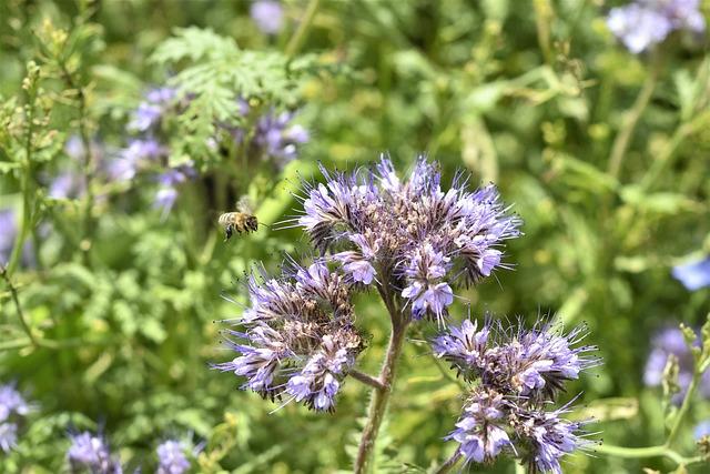 Plant, Flower, Field, Summer, Bloom, Flora, Botany