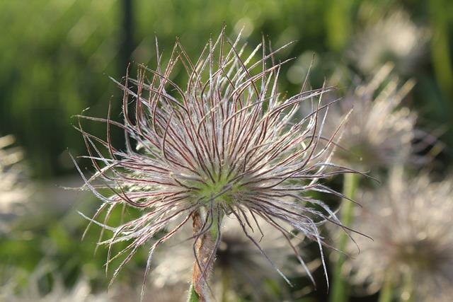 Nature, Plant, Flower, Summer, Grass
