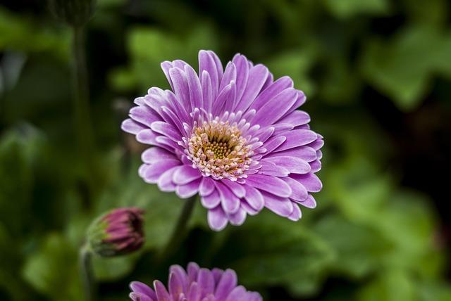 Beauty Flower, Plant, Nature, Flower, Summer