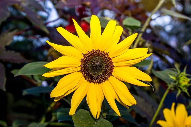 Flora, Nature, Flower, Summer, Leaf