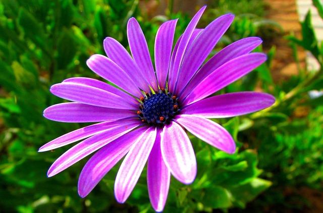 Nature, Plant, Flower, Summer, Garden, Violet, Macro