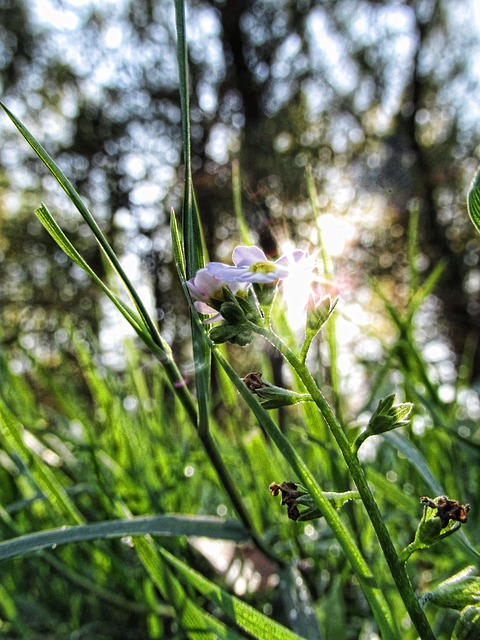Flower, Nature, Green, Beautiful, Flora, Summer, Fresh
