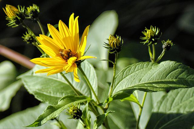 Flower, Nature, Yellow, Summer Flowers, Summer, Blossom