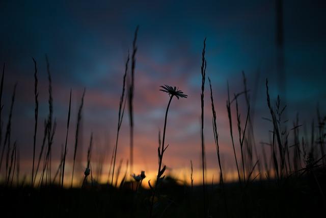 Sunrise, Desktop Background, Flower, Sky, Morning