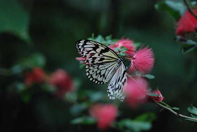Butterfly, Insect, Flower, Plant, Feeding, Thistles