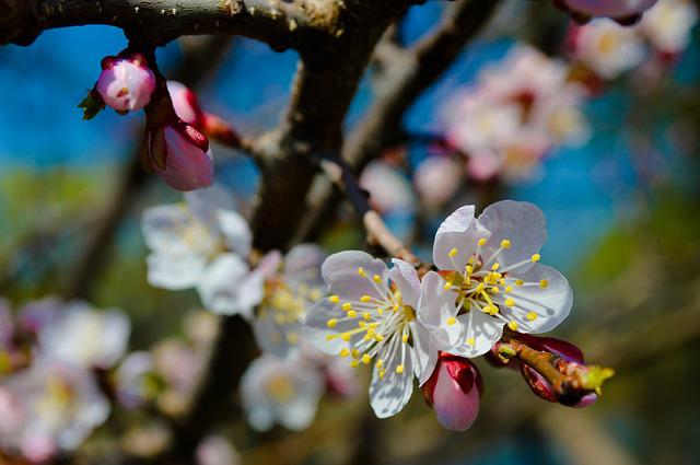 Flower, Tree, Spring, Flowering Branch, Flowering Tree