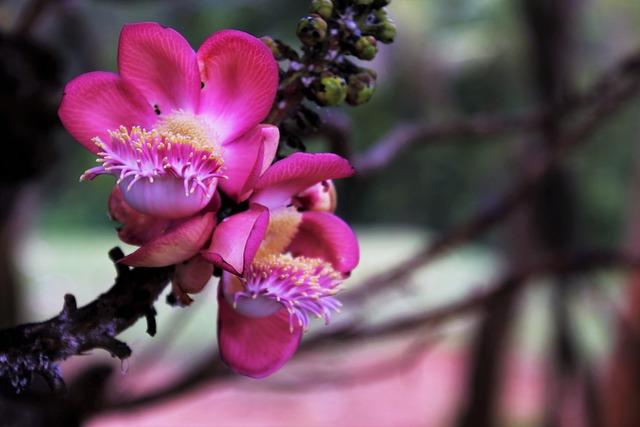 Flower, Nature, Plant, Beautiful, Leaf, Garden, Tree