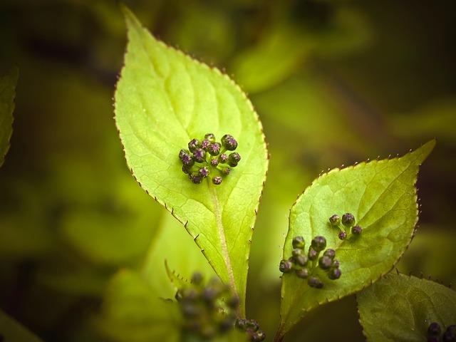 Japanese Helwingie, Helwingie, Tree, Flower, Exotic