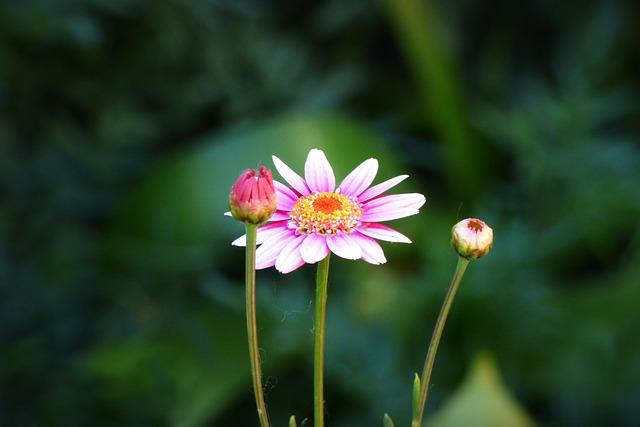 Flower, Petals, Plant, Nature, Rosa, Pollen, Vegetation