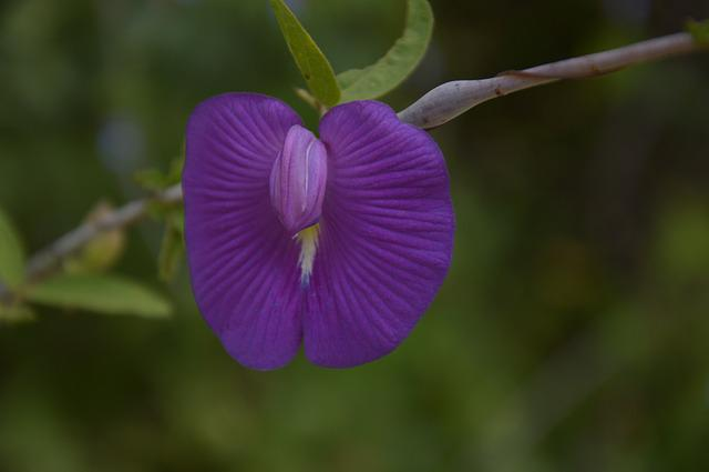 Flower, Violet, Rarity, Nature