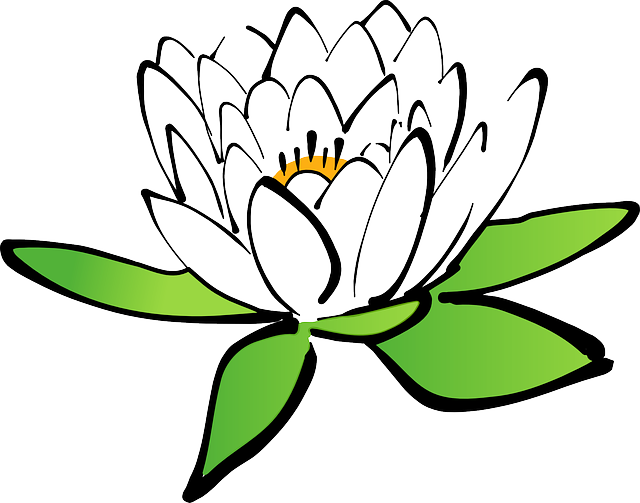 Lotus, Flower, Water Lily, White Water Lily, Bloom