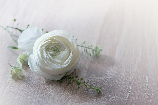 Flower, Ranunculus, Blossom, Bloom, White, Spring