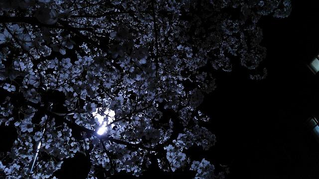 Flower, Night, Moon, White