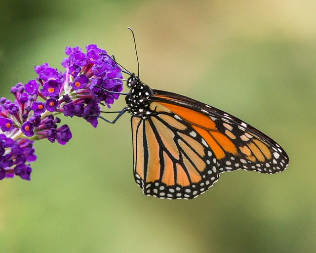 Butterfly, Insect, Nature, Flower, Wing, Summer