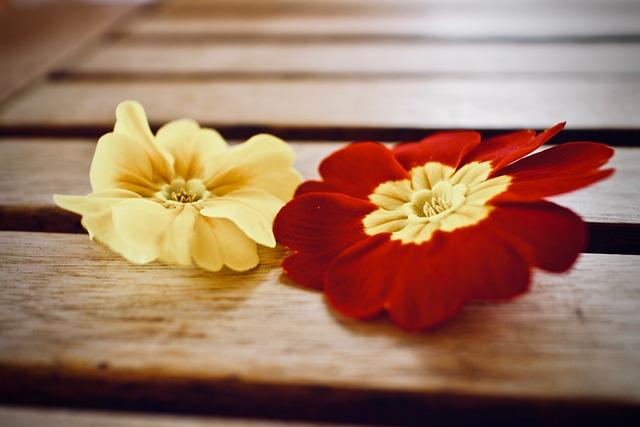 Spring, Primroses, Flower, Petal, Wood, Background