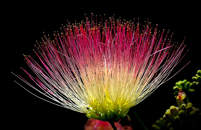Flower, Exotic, Colorful, Pink, Yellow, Green, Nature