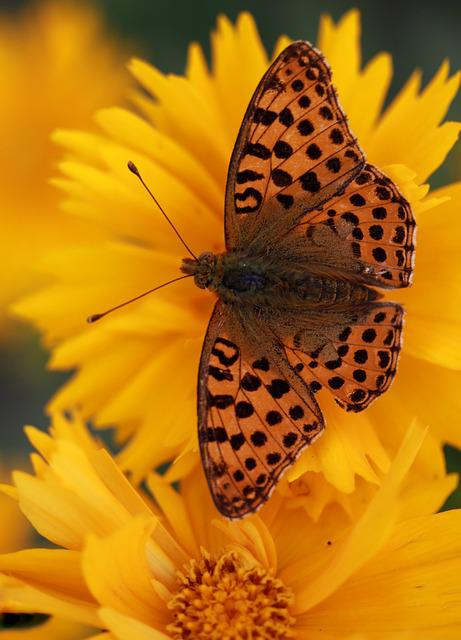 Butterfly, Flower, Yellow, Nature, Insect