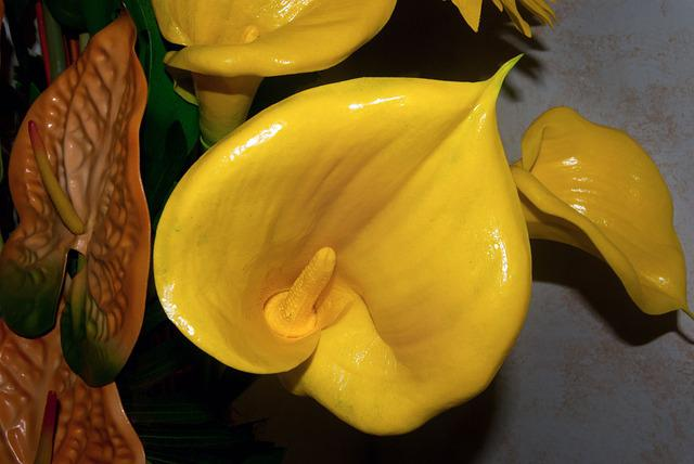 Flower, Yellow, Calla, Petals