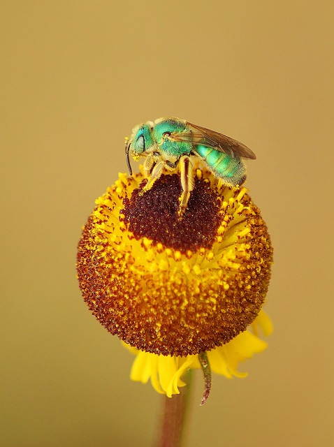 Yellow, Flower, Insect, Garden, Plant, Pollen, Bug