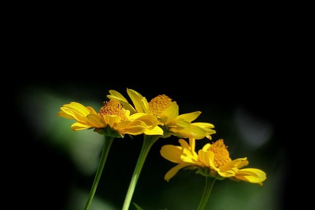 Nature, Plant, Flower, Summer, Bright, Yellow