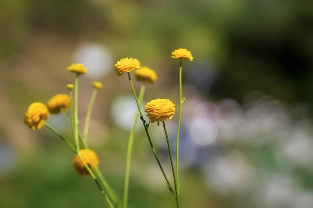 Flower, Yellow, Small, Tender, Summer, Nature, Blossom