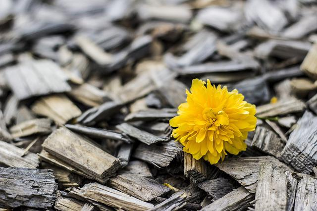 Yellow, Flower, Wood