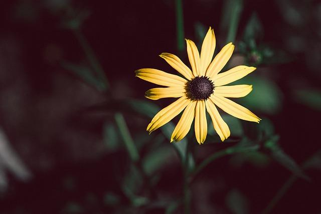 Flower, Sun Hat, Yellow, Yellow Flower