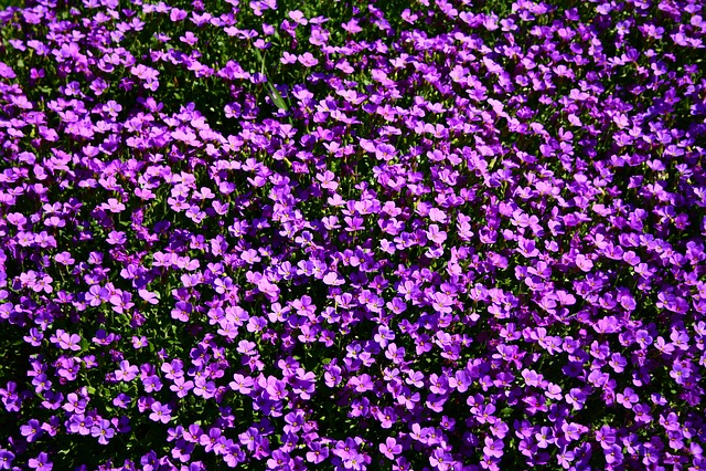 Flowerbed, Flowers, Summer, Summertime, Violet