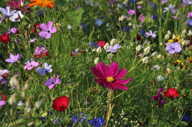 Wildflowers, Meadow, Grass, Plants, Nature, Flowering