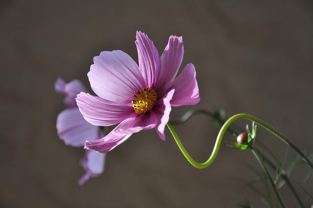 Flower, Plant, Flowering, Summer, Pink