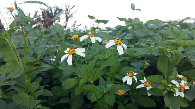 Flower, Green, Spring, Natural, Plant, Flowering