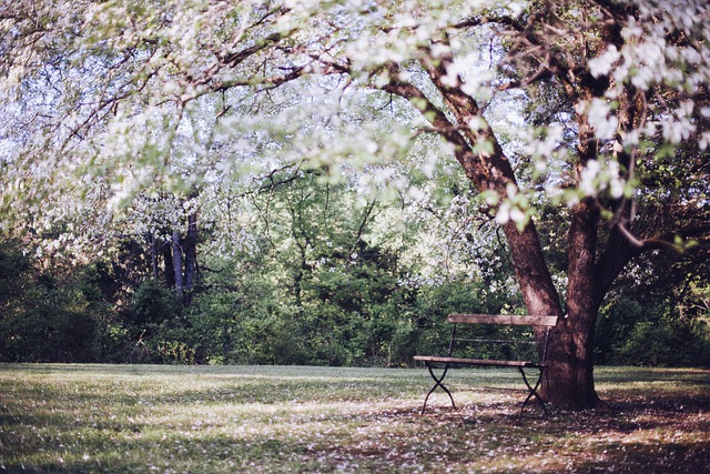 Flowering Tree, Park Bench, Bench, Resting, Relaxing