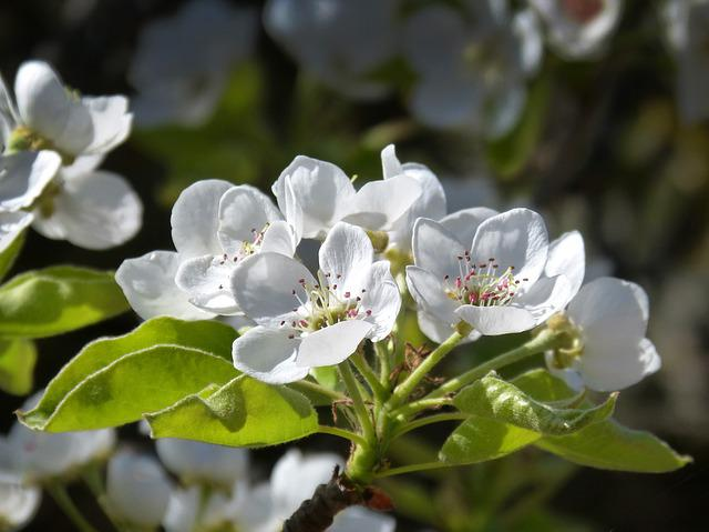 Fruit, Flower, Flowering Tree, Detail, Spring